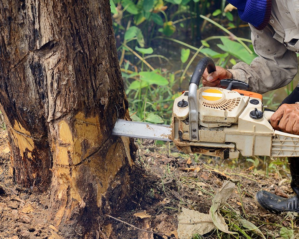 Tree Service Indianapolis - Tree Removal