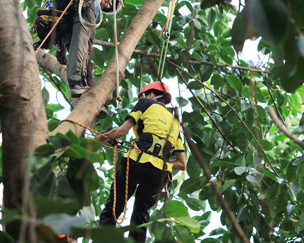 Tree Service Indianapolis - Emergency Tree Removal