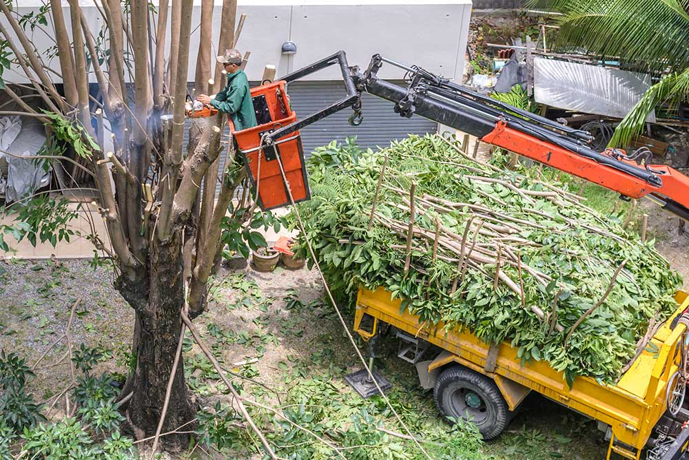 Tree Service Indianapolis - Tree Pruning